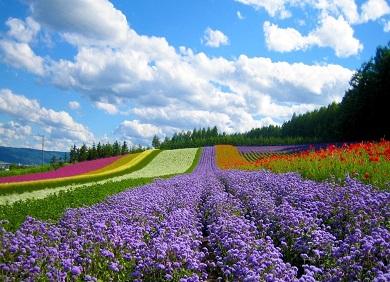 Du lịch Đà Lạt - Thành phố ngàn hoa