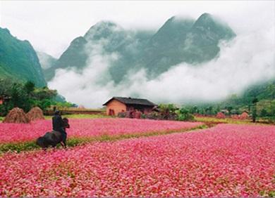 Bỏ túi kinh nghiệm du lịch Hà Giang
